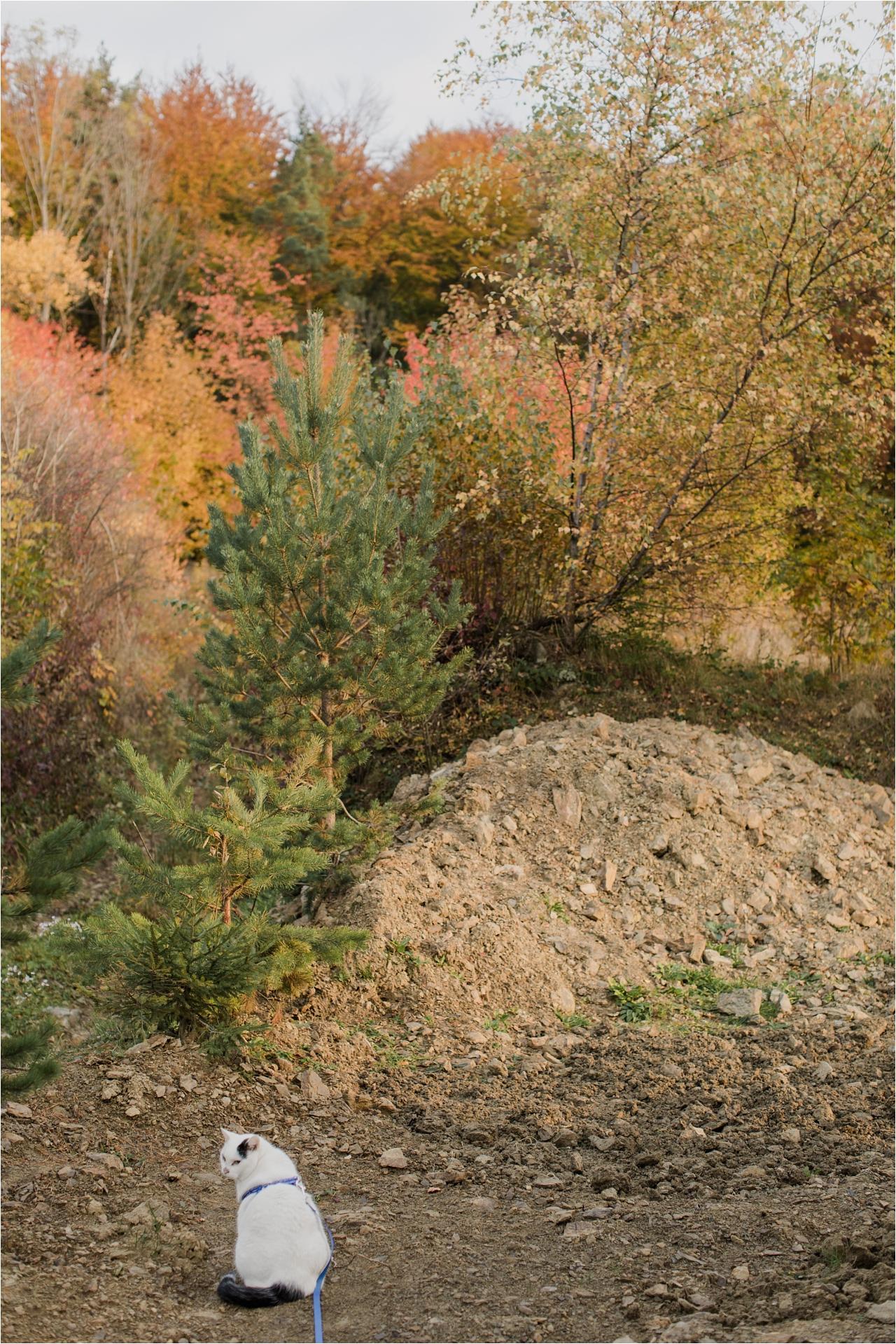 jesień wgórach, sesje fotogaficzne jesienne, kolory jesieni, kot naspacerze